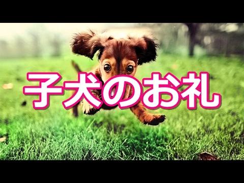 【心霊ちょっと良い話】子犬のお礼