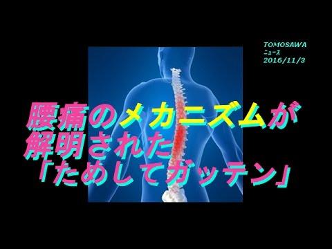 腰痛のメカニズムが解明された 「ためしてガッテン」