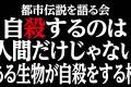 【都市伝説動画】犬が自殺する橋